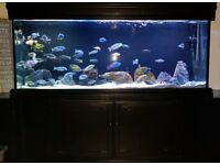 5 ft Aquarium and Cabinet