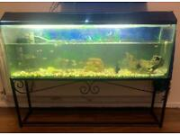 Fish tank with fish and stand