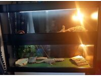 2 Bearded dragons with full setups ( seperate vivs)