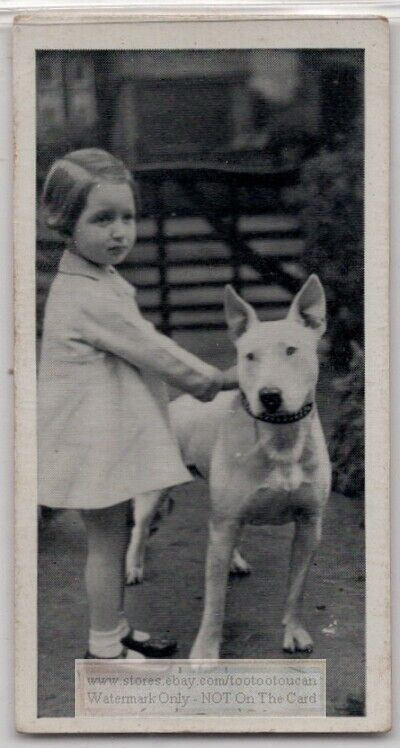 Bull Terrier Dog  With Young Child 1930s  Ad Trade Card
