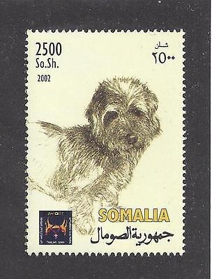 Rare Dog Art Head Study Postage Stamp DANDIE DINMONT TERRIER Somalia 2002 MNH