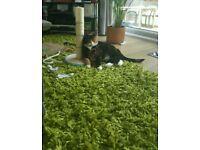 Large green rug 160x240cm