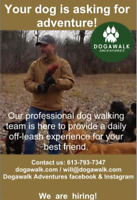 Dog Walker jobs