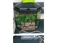 Reptile vivarium full set up