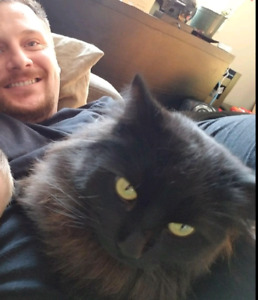 100$reward -LOST Black long haired cat