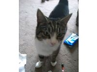 Tabby Female Cat Missing!!! :(