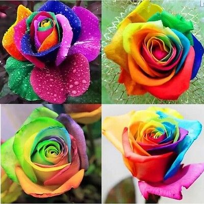USA-Seller 100pcs Colorful Rainbow Rose Flower Seeds Home Garden - Rainbow Flower