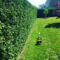 Hedge trimming, gardening, leaf clean up, snow removal