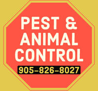 100% MOUSE RAT RODENT WILDLIFE TREATMENT REMOVAL  PEST CONTROL