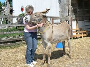 Animal Equine Reiki Training Cobourg ON 905-377-1743 Kawartha Lakes Peterborough Area image 4