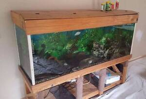 Huge Fish tank on stand, All Fish & Ornaments included! Bethania Logan Area Preview