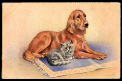 IRISH RED SETTER & KITTEN BLUE CAT GUNDOG ANTIQUE DOG POSTCARD by Mabel Gear