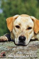 """Adult Male Dog - Labrador Retriever-Retriever: """"Raoul"""""""