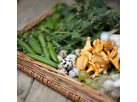 Experienced Kitchen Porter who can work fast and help with kitchen prep - and loves local food!