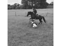 Pony for share/loan in Gorebridge