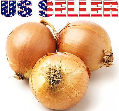 100+ ORGANICALLY GROWN GIANT Walla Walla Sweet Onion Seeds Heirloom NON-GMO (Sweet Onion)