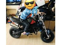 125cc Skyteam Monkey Bike not pitbike Quad
