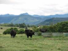 Old Dairy Farm on 93 acres, Magnificent views, Close to town Boonah Ipswich South Preview