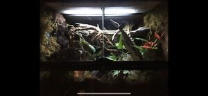 Snake Terrariums Kijiji Buy Sell Save With Canada S 1 Local