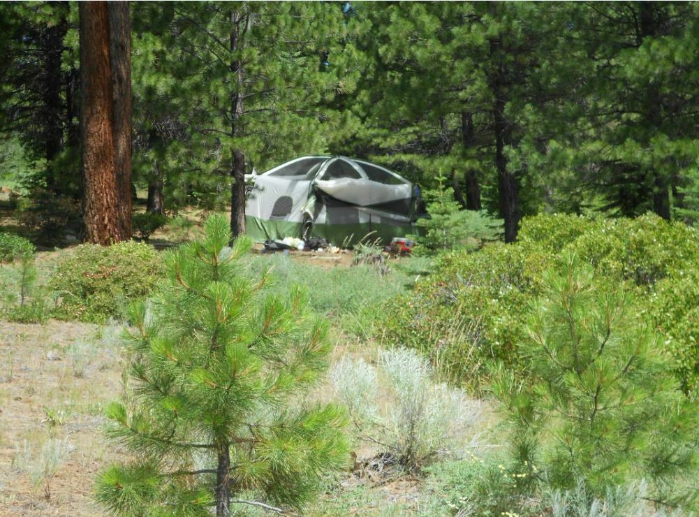 SALE California Pines .9 Acre Low Cost, Low Payments Near Power Steal  - $11.50