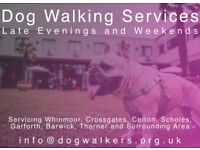 Evening and Weekend Dog Walking Services - Your Dog Walker