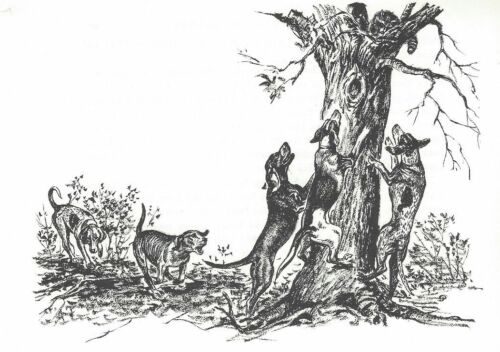 COONHOUND - 1964 Dog Art Print - MATTED