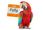 Bird Supplies UK