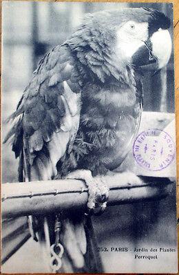 1913 Parrot Postcard: Jardin des Plantes, Paris w/Souvenir Stamp- Perroquet Bird