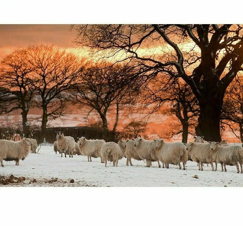 Animal Sheep Diamond Painting Winter Landscape Design Embroidery