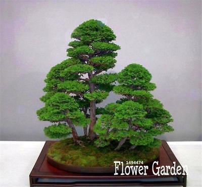 Bonsai Seeds Tree Plant Potted Flowers Decor Purifier Absorbent Home Decoration