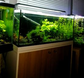 81 litre aquarium