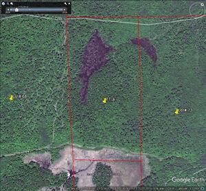 Terre a bois avec 2 ruisseaux & 2 lacs de castors, petite érabli