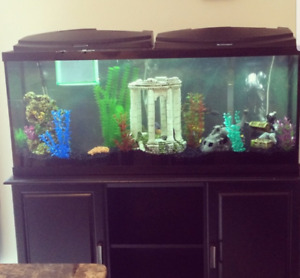 100Gallon Fish Tank and Stand