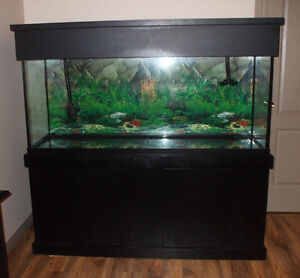 Aquarium new used pet accessories in lethbridge for How do you clean a fish tank