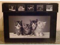 3 'Kitten' Photo Albumns In Presentation Box