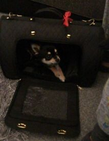 Puppy Small dog bag