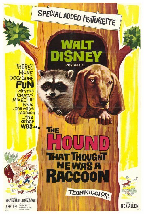 THE HOUND THAT THOUGHT HE WAS A RACOON Movie POSTER 27x40 Rex Allen