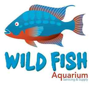 WILD FISH AQUARIUM.-51 mcmurchy ave south,brampton