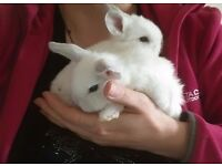 Lovely white baby rabbits looking for their forever home