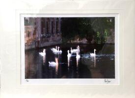 Swans Bruges/Brugge Belgium Fine Art Limited Edition Print/Photo 15/500