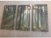 Canvas prints woodland scene x3
