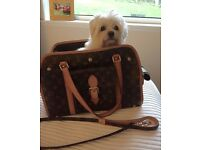 Louis Vuitton (Genuine) dog carrier with matching lead.