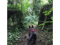 Dog Walker & Pet Sitter - Local Pet Services (Leicester)