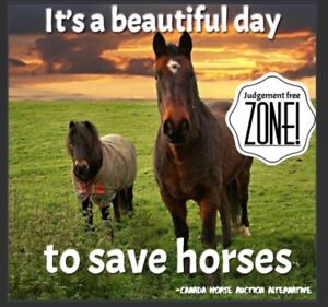Taking your horse to Auction? Try here first!!!