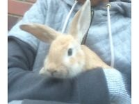 Rabbit for sale !!27