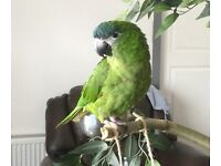 PLEASE HELP ME FIND MY LOST HAHNS MACAW IN STOKE-ON-TRENT