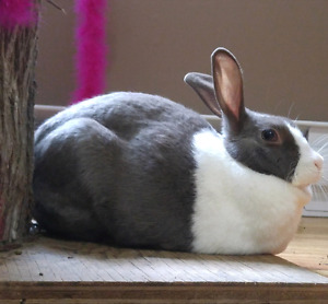 Bunny to rehome