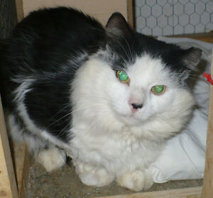 Neutered Male looking for his approved indoor only home