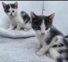 Beautiful playful kittens