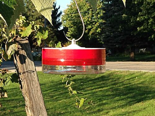 Try us for a Buck! - Healthy Hummingbird Feeder
